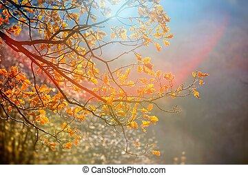 efterår, træ, park, sollys, gul