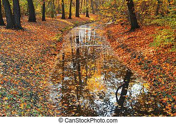efterår træ, reflekter, ind, flod