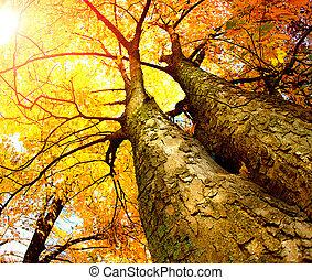 efterår, træer., fald