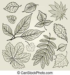 efterår, vektor, sæt, det leafs
