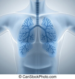 egészséges, kitakarít, tüdő