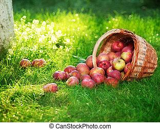 egészséges, kosár, szerves, alma