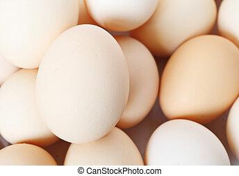 egg background