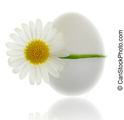 Egg bound with white daisy isolated on white