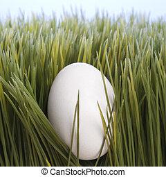 Egg in grass.