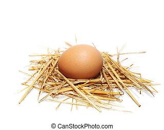 egg in nest isolated on white
