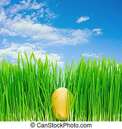 egg in the grass, blue sky