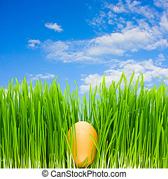 egg in the grass, blue sky