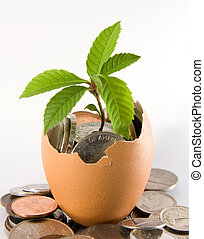 Egg, leaf and coin - Plant grows out from an egg full with ...