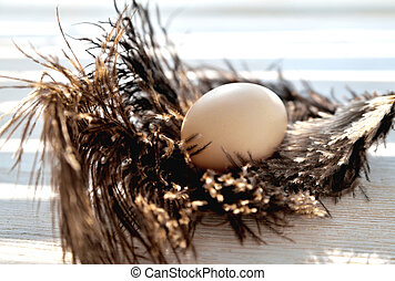 Egg lies on ostrich feathers, backlight, natural wood background