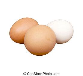 Egg of the hen
