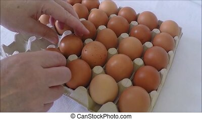 Egg - Person choosing the best egg from a carton of eggs