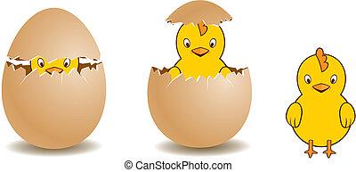 egg pip - a image of breeding process