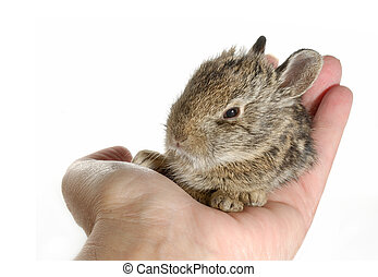 Egg sized Baby Bunny Rabbit sitting in palm of hand
