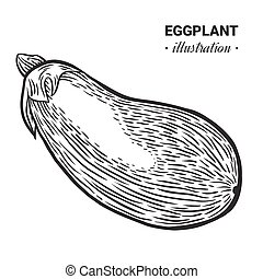 Eggplant fresh food vector hand drawn illustration