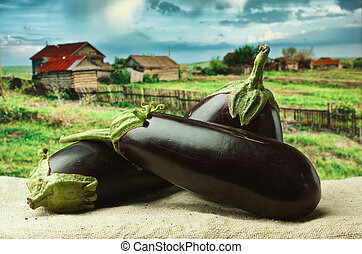 eggplant on the background of rural areas