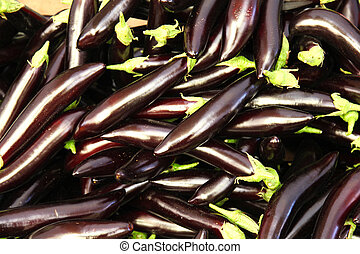 the eggplant, aubergine, melongene, brinjal or guinea squash is a plant of the family Solanaceae, also known as the nightshades, and genus Solanum