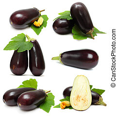 Eggplant vegetable on white background - set