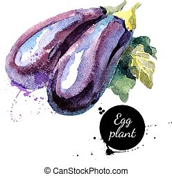 Eggplants. Hand drawn watercolor painting on white...