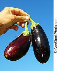 eggplants in hand