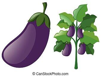 Eggplants on the tree
