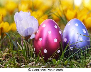 eggs, пасха, луг, крокус