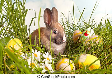 Eggs and easter bunny