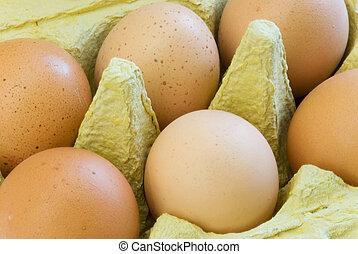 eggs carton - brown eggs in an egg carton