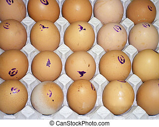 Chicken eggs lay in cells, first grade