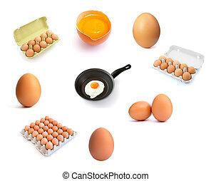 eggs group 1