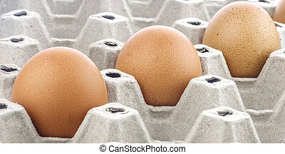 eggs in a cardboard box on background