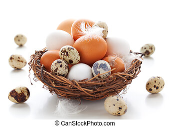 Eggs in a nest on a white background - Different types of...