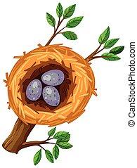 Eggs in bird nest illustration