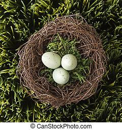 Eggs in nest.