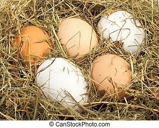 eggs in nest close up for you design