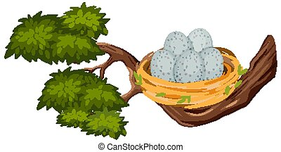 Eggs in the bird nest on tree branch