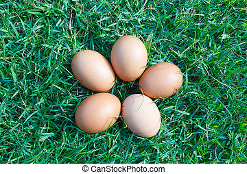 Eggs in the green grass