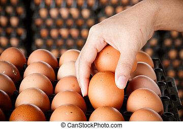 eggs in women hands