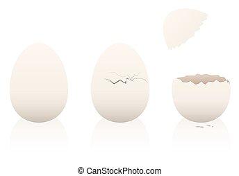 Eggs Intact Broken Open Eggshell - Eggs - one is intact, the...