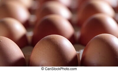 Eggs lie in the cardboard support,