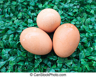 eggs on green grass, easter eggs