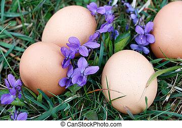 Eggs on ground