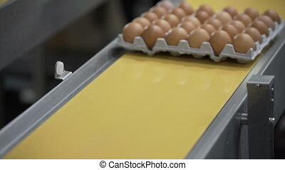 Eggs on the production line Poultry Factory