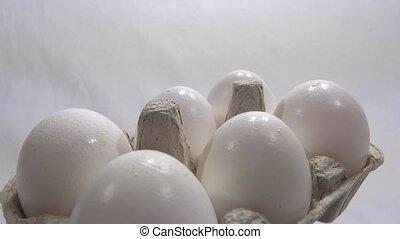 eggs presentation