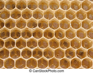 Queen bee in a delayed cell eggs. There is a reproduction of bees.