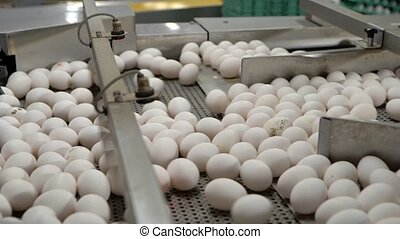 Eggs sorting in the factory . Slow motion - Eggs sorting in...