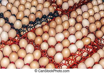Eggs stored 2
