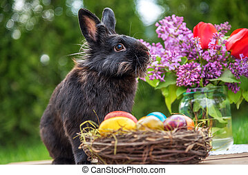 eggs., wielkanocny królik