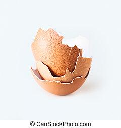 Eggshell close-up