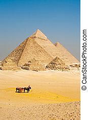 egipcio, turistas, pirámides, giza